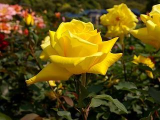 Yellow070515